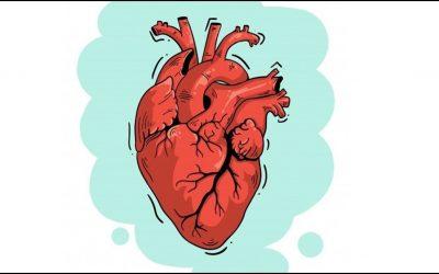 Como varia a frequência cardíaca em resposta ao exercício?
